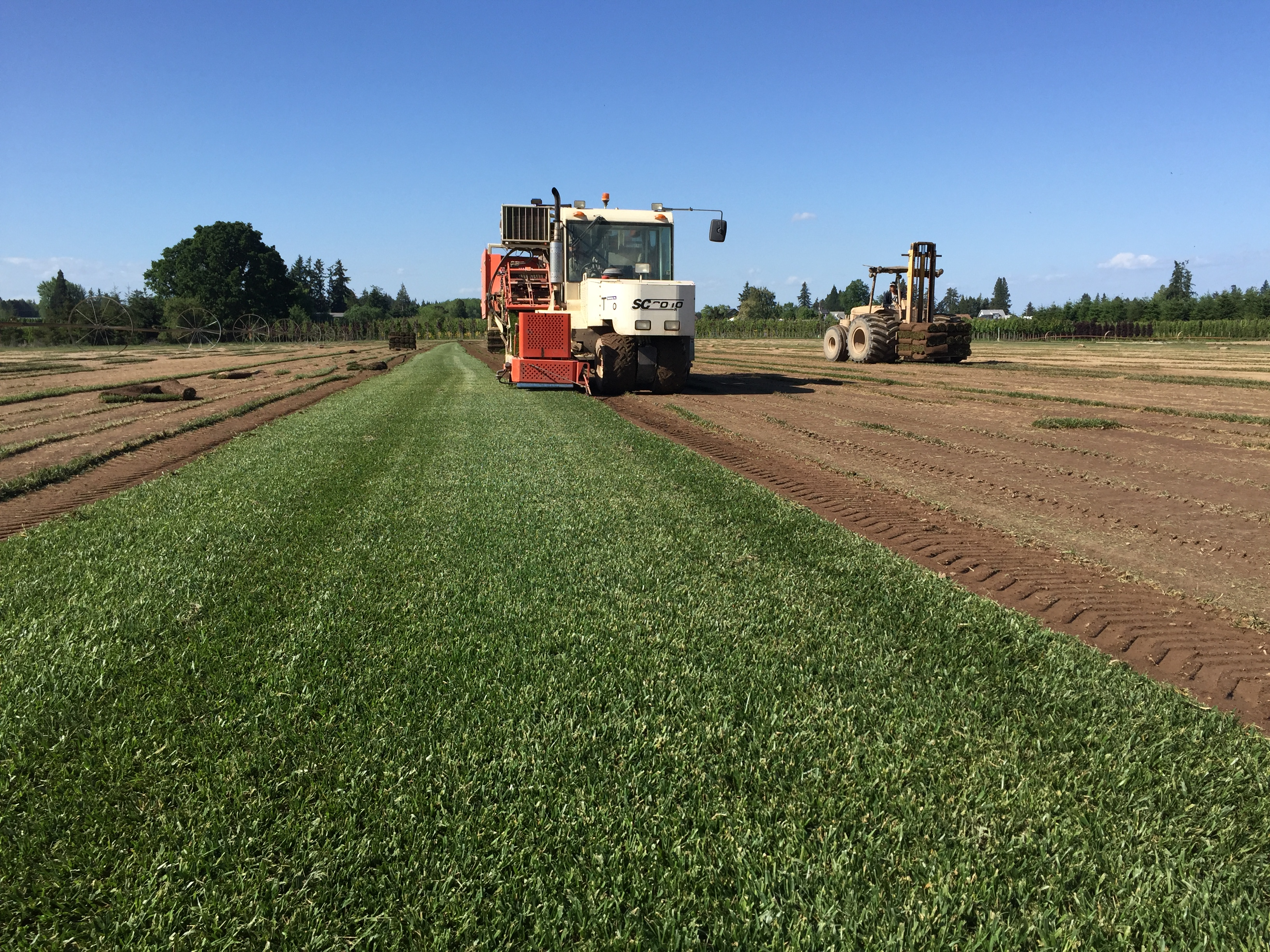 Rtf Sod Being Harvested Kuenzi Turf Nursery M Or